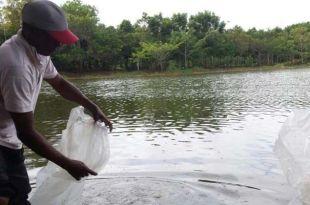Liberación de alevines en la laguna de Dema, en La Colonial de San Luis