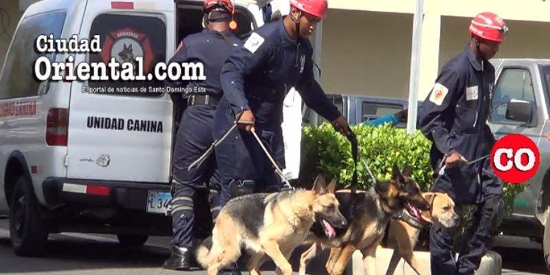 Lola, So y Carmen, los tres perros bomberos en SDE  están en servicio en Semana Santa + Vídeo