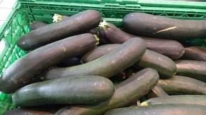 Calabacín, hortaliza que pertenece a la misma especie de la calabaza. Similar al pipián