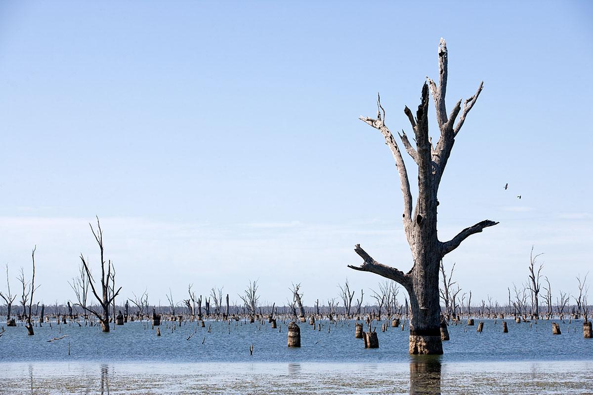 Jamie Holcombe - Civic Malaise - Lake Mulwala