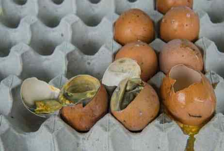 rotten egg smell in house