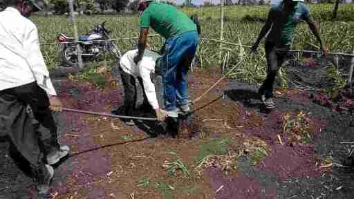 What Is Black Cotton Soil - Its Types, Properties, Composition