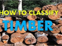 how to classify timber
