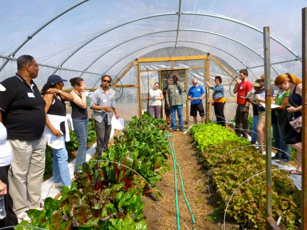 Urban Farms Wrestle With Gentrification And