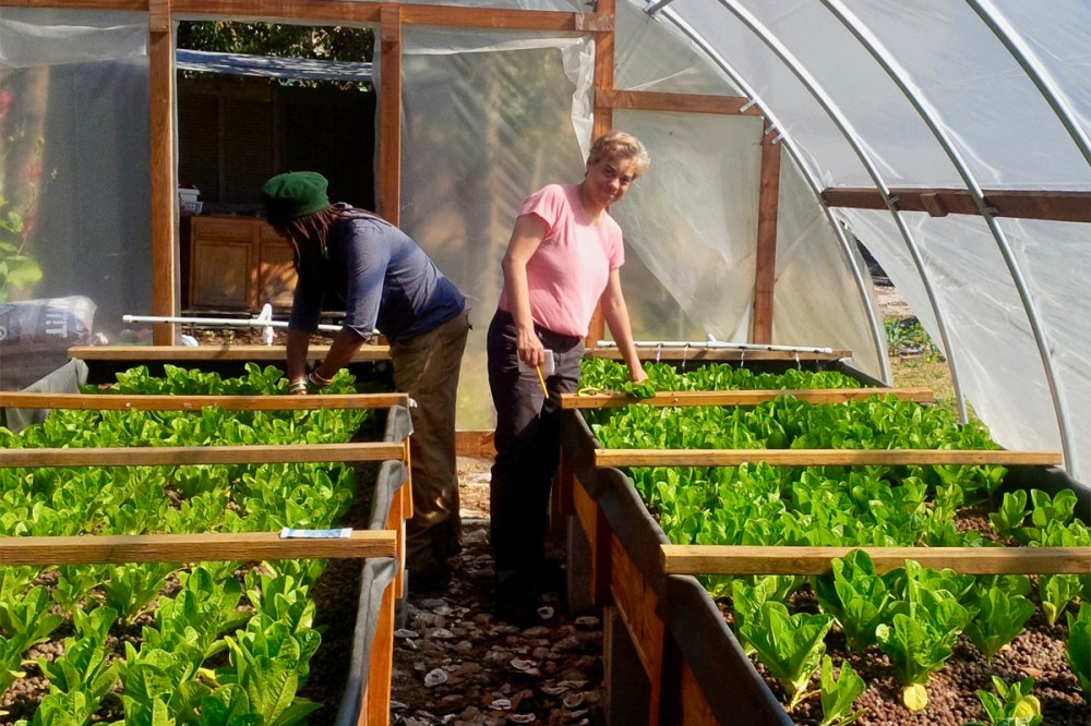 medium resolution of aquaponics farmers band together to set their industry apart