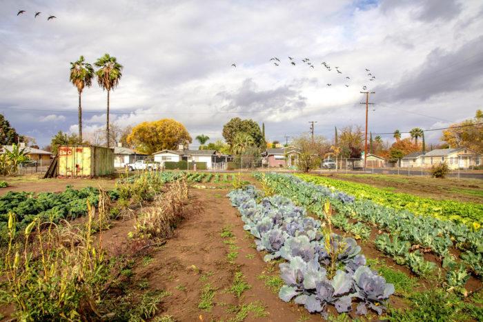 Black Owned Farm