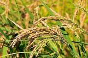 Weather for Kharif seasons and Rabi seasons