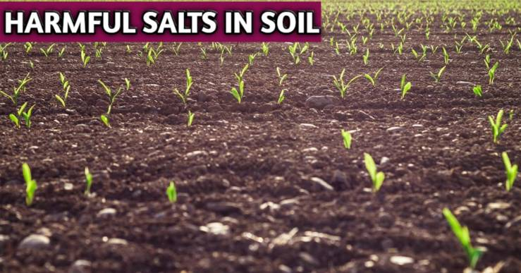 Harmful Salts In Soils