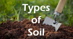 Types of Indian Soils