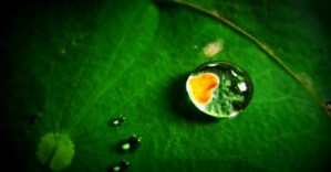 Water requirements of crop