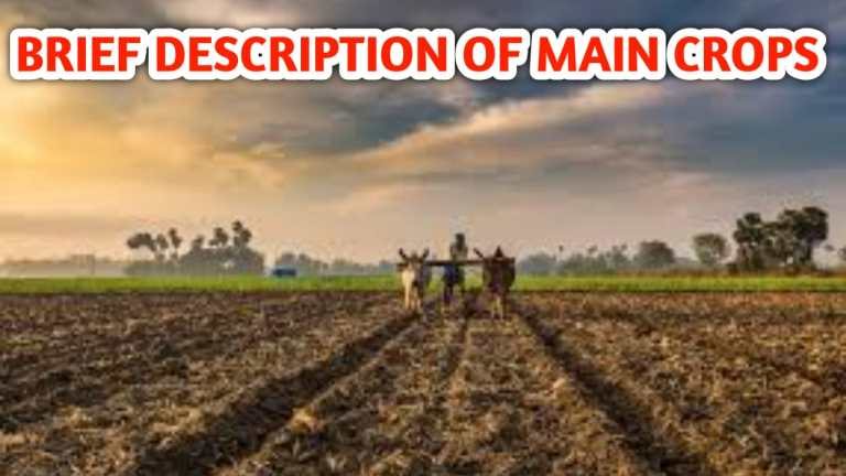 Read more about the article BRIEF DESCRIPTION OF MAIN CROPS