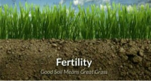 FERTILITY OF SOIL