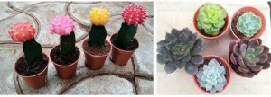Indoor plants pots
