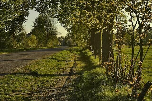 Roadside Development and Arboriculture - MCQ