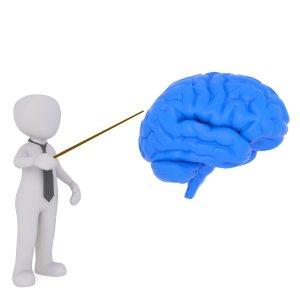 teacher, brain, brain research