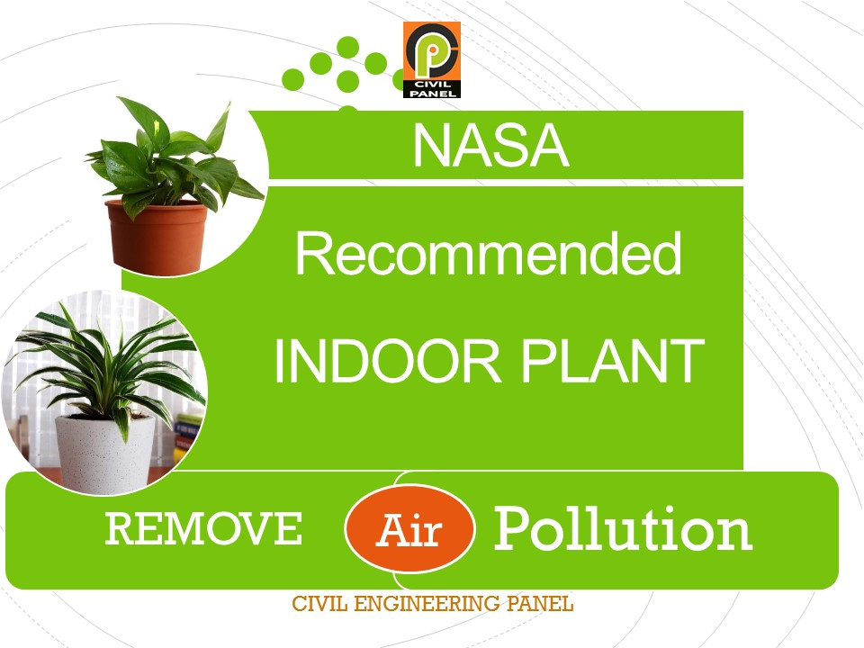 NASA Guide to Air-Filtering House Plants