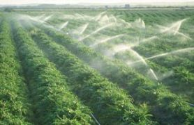 Importance-of-Irrigation-System