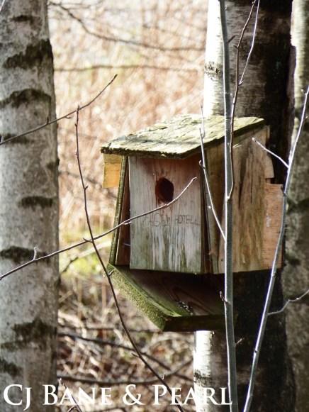 Fågelhotel