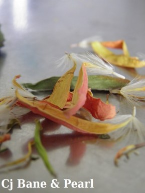 Pieces of flowers
