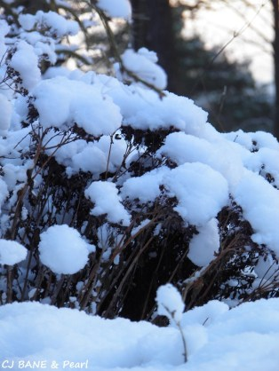 Snowflakes bloom