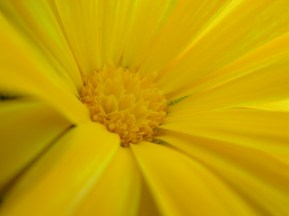 Color yellow always reminds me smileys :)