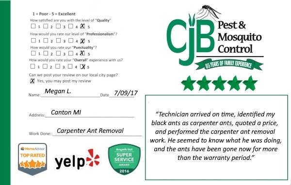 Canton Mi.Carpenter Ant Removal Review