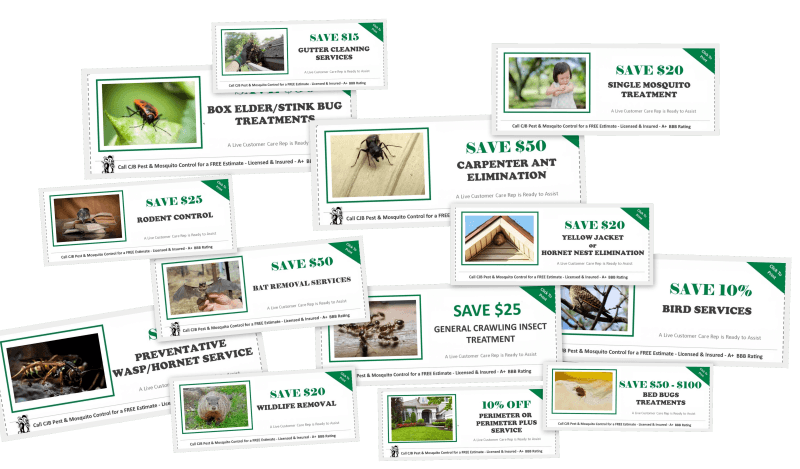 CJB Pest Coupons