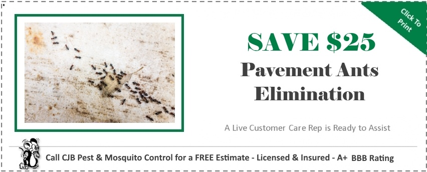 Pavement Ants Coupon