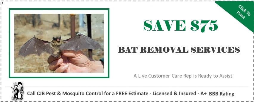 New Bat Removal Coupon