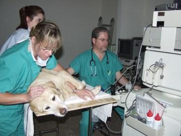 Abdominal Ultrasound Exam