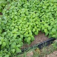 My new Start - Medicinal Garden