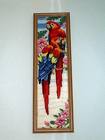 Jungle Macaws
