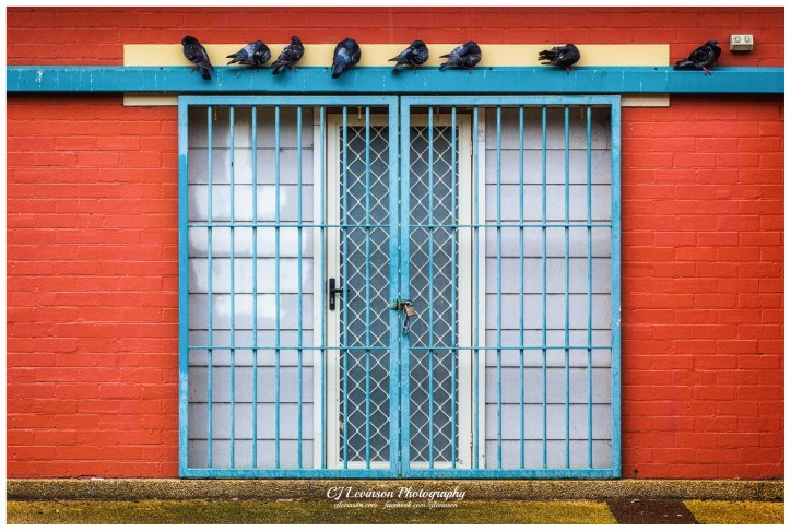 The Birds and the Gate