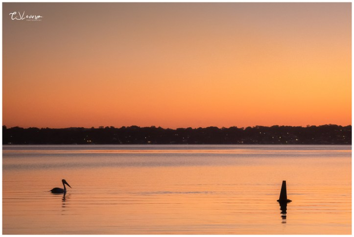 Pelican on the Lake at Dusk