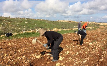 Readying the soil at Tent of Nations