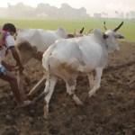 New MSP for Kharif crops