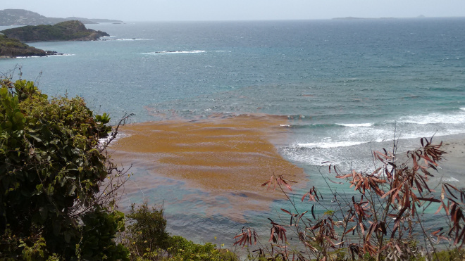 The Sargassum infestation. A spiny weed that grows in the ocean, usually found further south. It has been a problem for the locals this year.