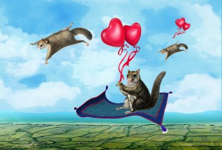 The Flying Squirrels