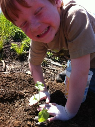 Bean helping to plant Broccoli