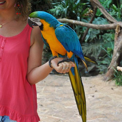 Visita ao Parque das Aves em Foz do Iguaçu