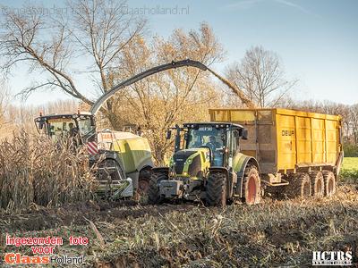 Modderen in de maisoogst in België.
