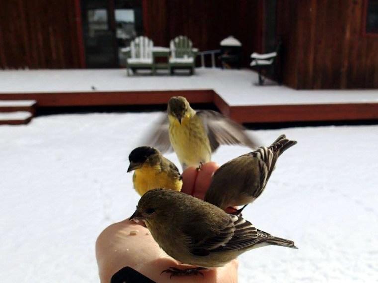 Carol feeding finches by hand