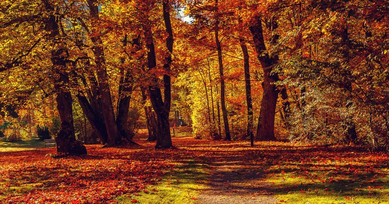 Autumn Health Tips ClaimLinx