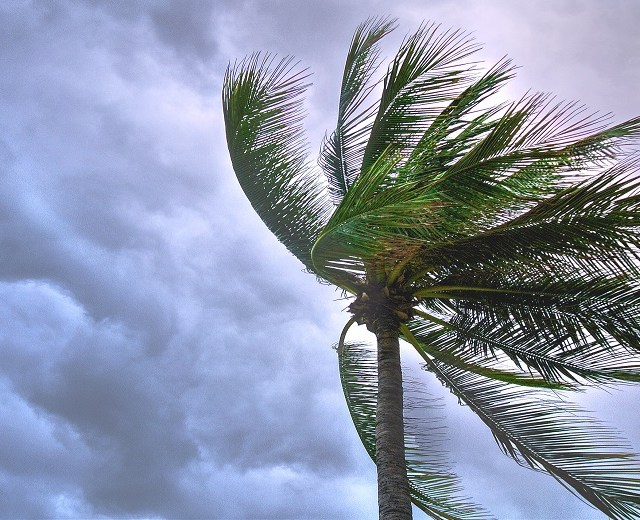 palm tree windy cloudy sky