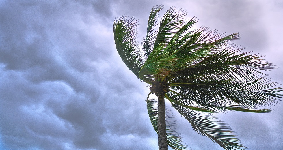 palm tree windy cloudy sky
