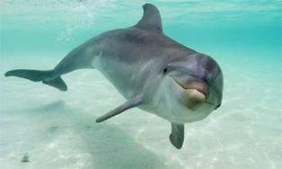 dolphin-12