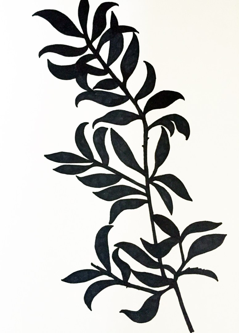 clairebrewster_drawing_plant2