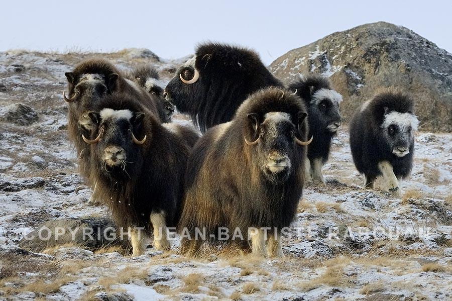 Livre : à la recherche des laines précieuses