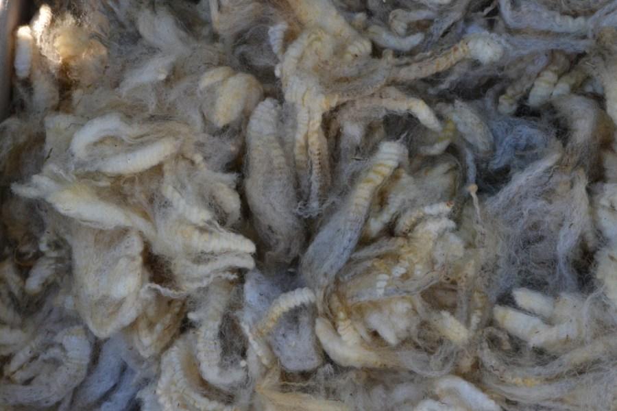 Toison d'agneau Suffolk