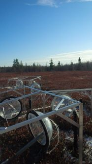 Assisted peatland carbon exchange researchers at Mer Bleue Bog in Ottawa.